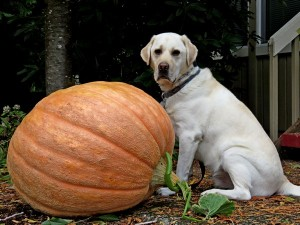 wallace pumpkin 02